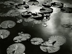 Lily Pond, Europe, 1968 by Brett Weston