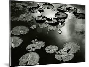 Lily Pond, Europe, 1968 by Brett Weston
