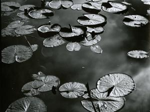 Lily Pond, Europe, c. 1968 by Brett Weston