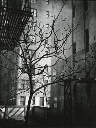 Manhattan Courtyard, New York, 1945 by Brett Weston