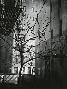 Manhattan Courtyard, New York, 1945 by Brett Weston