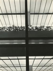 Manufacturers Hanover Trust, New York, 1957 by Brett Weston