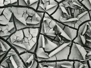 Mud Cracks, Garrapata , 1955 by Brett Weston