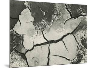 Mud Cracks, Salinas Valley, California, 1955 by Brett Weston