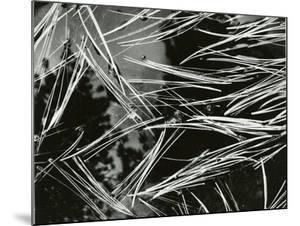 Pine Needles and Water, 1967 by Brett Weston