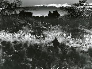 Plants and Landscape, c. 1980 by Brett Weston