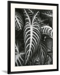 Plants and Leaves, c. 1985 by Brett Weston