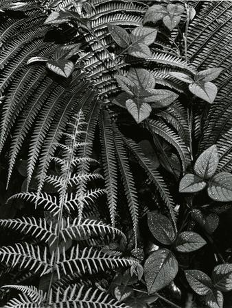 Plants and Leaves, Hawaii, c. 1985