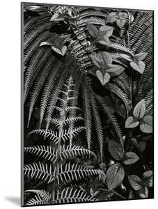 Plants and Leaves, Hawaii, c. 1985 by Brett Weston