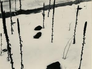 Plants and Snow, Nevada, 1953 by Brett Weston