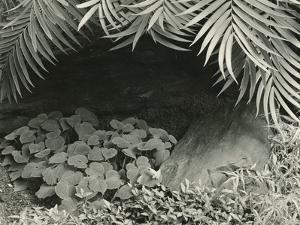 Plants, Bronx Botanical Garden, New York, 1945 by Brett Weston