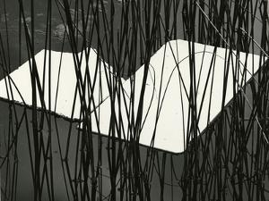 Reeds and Plastic, Norway, 1972 by Brett Weston