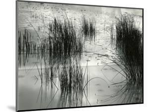 Reeds, France, 1960 by Brett Weston