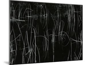 Reeds, Oregon, 1975 by Brett Weston