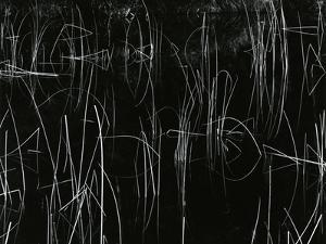 Reeds, Oregon, 1975 by Brett Weston