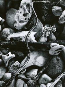 Rock, Driftwood, Kelp, Carmel Beach, 1958 by Brett Weston