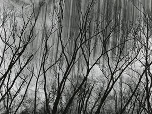 Rock Wall and Trees, Glen Canyon, 1959 by Brett Weston
