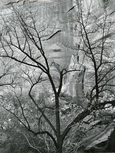 Rock Wall and Trees, Glen Canyon, c. 1960 by Brett Weston