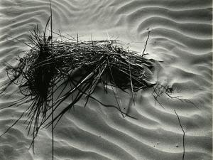 Sand and Grass, White Sands, 1946(Printed 1975) by Brett Weston