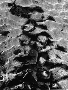 Sand, c.1970 by Brett Weston
