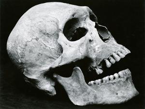 Skull Profile, 1952 by Brett Weston