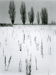 Snow and Trees, Mono Lake, California, c. 1960 by Brett Weston