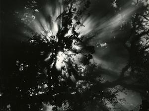 Sunburstm Hawaii, 1978 by Brett Weston