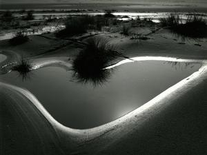 Tide Pool, Oregon, 1971 by Brett Weston