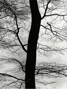 Tree and Sky, Europe, 1971 by Brett Weston