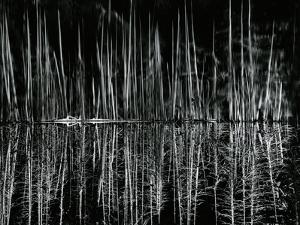 Tree and Water Reflection, High Sierra, c.1960 by Brett Weston