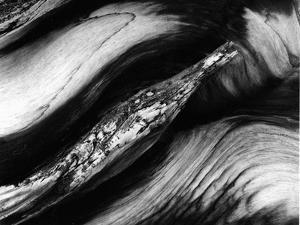 Tree Bark, 1977 by Brett Weston