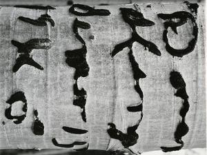 Tree Bark, c. 1970 by Brett Weston
