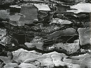 Tree Bark, c.1970 by Brett Weston