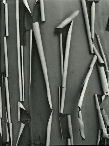 Tree Bark, c.1975 by Brett Weston