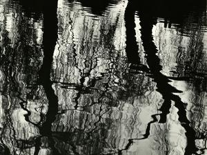 Tree, Reflections, Europe, 1971 by Brett Weston