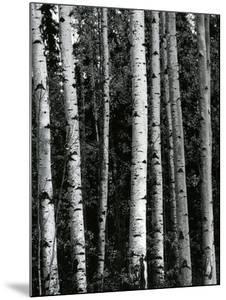 Trees, c. 1970 by Brett Weston