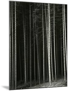 Trees, Germany, 1971 by Brett Weston