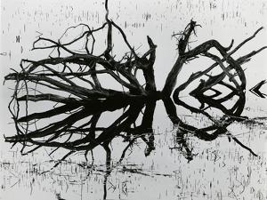 Water and Tree, Reflection, 1977 by Brett Weston
