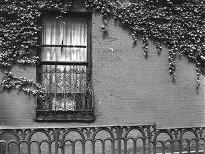 Window and Ivy, New York, 1945 by Brett Weston