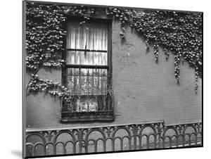 Window and Ivy, New York, 1945 by Brett Weston