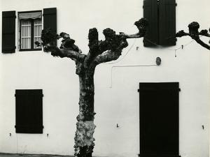 Windows and Pruned Tree, Spain, 1960 by Brett Weston
