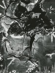 Wood, 1970 by Brett Weston