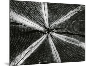 Wood, 1972 by Brett Weston
