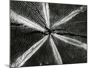 Wood, 1972 by Brett Weston