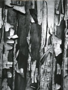 Wood and Cracked Paint, c. 1975 by Brett Weston
