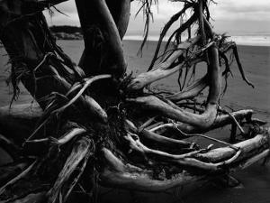 Wood and Sand, Alaska, c. 1970 by Brett Weston