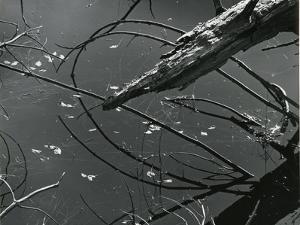 Wood and Water, c. 1970 by Brett Weston