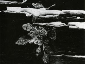 Wood, c. 1970 by Brett Weston