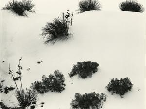 Yucca and Dunes, White Sands, 1946 by Brett Weston