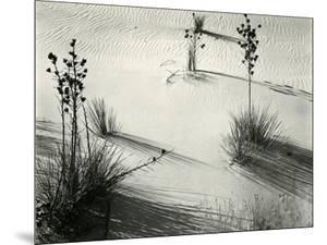 Yucca, White Sands, 1946 by Brett Weston